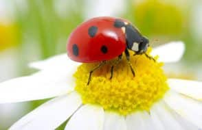 ladybug sits on a flower petal; Shutterstock ID 124603681; PO: Anne Mc. Web Pics