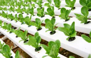 Know more about Hydroponics Gardening