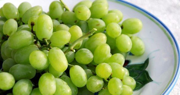 Wonderful Health benefits of Grapes (Vitis Vinifera)