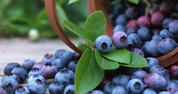 5 Foods that will help Brain Sharpening