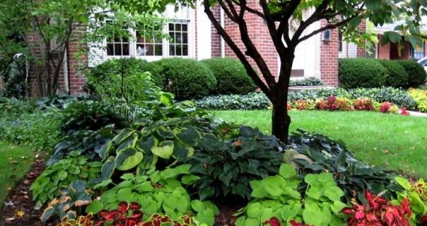 Make Your Garden Look Amazing