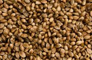 Amazing Hemp Seed Oil benefits for Skin